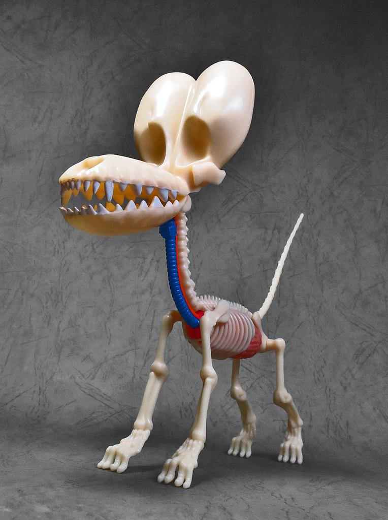 4D MASTER BALLOON DOG ANATOMY:25.jpg
