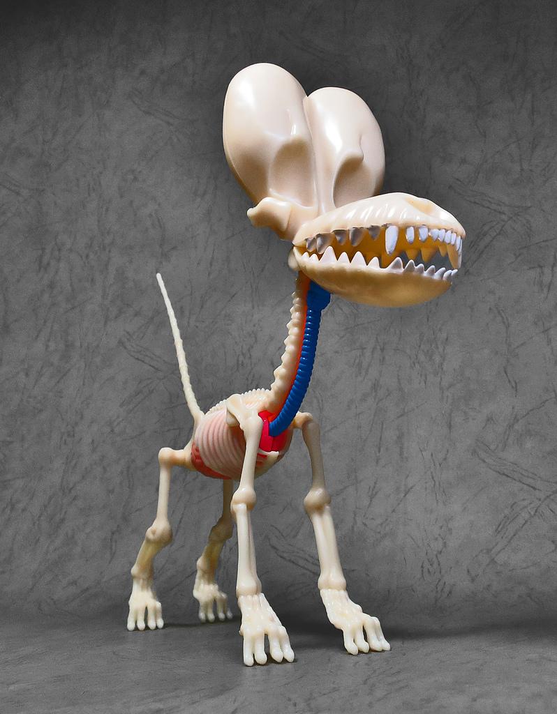 4D MASTER BALLOON DOG ANATOMY:27.jpg