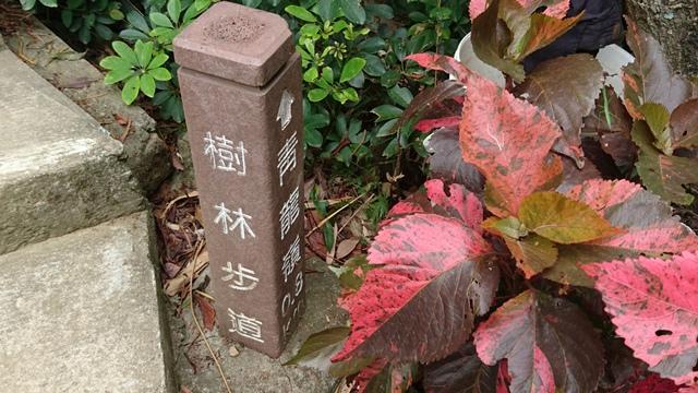 2015.11.22姜子寮山:DSC_0179.JPG