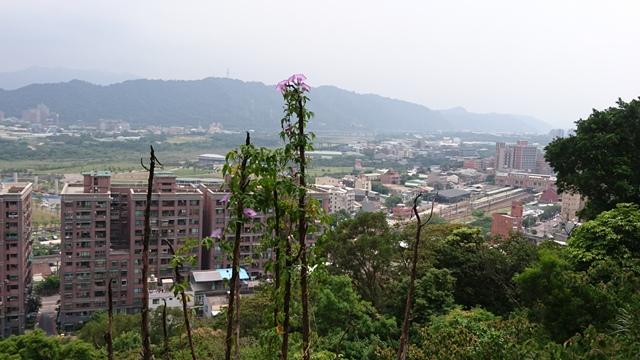 2015.11.22姜子寮山:DSC_0300.JPG