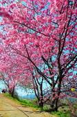 2015春  司馬庫斯賞櫻之旅:2015春  司馬庫斯賞櫻行_014.jpg