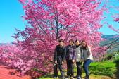 2015春  司馬庫斯賞櫻之旅:2015春  司馬庫斯賞櫻行_010.jpg