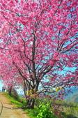 2015春  司馬庫斯賞櫻之旅:2015春  司馬庫斯賞櫻行_013.jpg