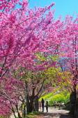 2015春  司馬庫斯賞櫻之旅:2015春  司馬庫斯賞櫻行_007.jpg