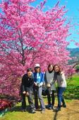 2015春  司馬庫斯賞櫻之旅:2015春  司馬庫斯賞櫻行_009.jpg