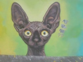 【嘉義。民雄】貓的彩繪村:P_20150411_093849.jpg