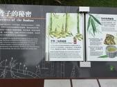 【中國。深圳】 仙楂植物園:IMG_1446.JPG