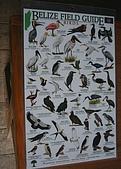 【貝里斯。生活】Belize Life就是愛海泥根:貝里斯-鳥全集