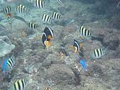 fun假新玩法-浮潛餵魚去:P8240635