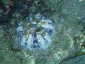 漁人休閒-海洋生物第一部:P8303994.JPG