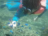 fun假新玩法-浮潛餵魚去:P8060055