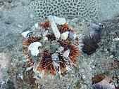 漁人休閒-海洋生物第一部:P8303992.JPG