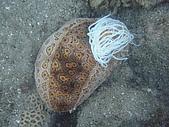 漁人休閒-海洋生物第一部:P6011721