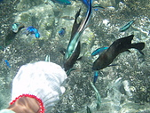 fun假新玩法-浮潛餵魚去:吃飯喽1