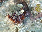 漁人休閒-海洋生物第一部:P8303945.JPG