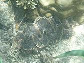 漁人休閒-海洋生物第一部:P6243157