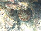漁人休閒-海洋生物第一部:P8303957.JPG