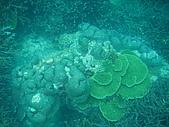 漁人休閒-珊瑚篇:IMGP0118