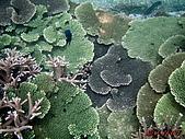 漁人休閒-珊瑚篇:P8233827-1.jpg