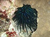 漁人休閒-海洋生物第一部:P8283924.JPG