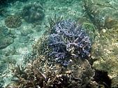 漁人休閒-珊瑚篇:海底一隅1