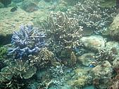 漁人休閒-珊瑚篇:P6011737