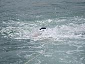 漁人休閒-滑水:下水的海膽.JPG