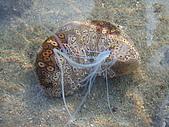 漁人休閒-海洋生物第一部:P8303991.JPG