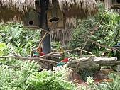 98.07.13綠世界生態農場:DSCN1533.jpg
