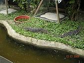 98.07.13綠世界生態農場:DSCN1547.jpg