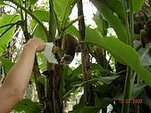 98.07.13綠世界生態農場:DSCN1545.jpg