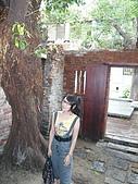 剝皮寮老街~艋舺2009/10/13:喜歡老樹在房子內