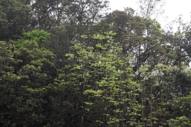 1050409猴硐煤鄉探遊賞花趣活動紀錄6 - 猴洞地方永續發展協會