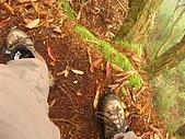 高台山+島田小.中.大.山2010-05-16 :高台山+島田小中大山2010-05-16 039.jpg