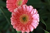 110207 溪州公園賞花:110207HsiChou77.JPG