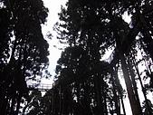 溪頭小半天之旅:P1040202.JPG