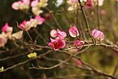 110207 溪州公園賞花:110207HsiChou52.JPG