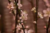 110207 溪州公園賞花:110207HsiChou35.JPG