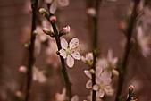 110207 溪州公園賞花:110207HsiChou36.JPG