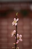 110207 溪州公園賞花:110207HsiChou37.JPG