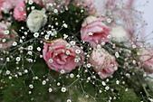 110207 溪州公園賞花:110207HsiChou70.JPG