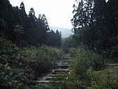 溪頭小半天之旅:P1040163.JPG