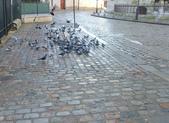 603巴黎蒙馬特畫家村 -小丘廣場:00191巴黎蒙馬特畫家村小丘廣古典吉他施夢濤.jpg
