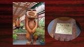 534 武陵農場 櫻花鉤吻鮭 七家灣溪:00103武陵農場櫻花鉤吻鮭七家灣溪.jpg