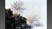 012 Taiwan landscap台灣風情畫吉他家施夢濤攝影作品Guitarist Albert:005台灣風景攝影古典吉他家施夢濤老師