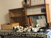 010 軌道燈投射燈工程設計製作LED燈魚池假山照明攝影燈光:軌道燈投射燈工程設計製作LED燈魚池假山照明攝影燈光00132.jpeg
