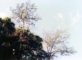 012 Taiwan landscap台灣風情畫吉他家施夢濤攝影作品Guitarist Albert:Taiwan landscap台灣風情畫005吉他家施夢濤.jpg