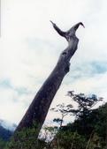 012 Taiwan landscap台灣風情畫吉他家施夢濤攝影作品Guitarist Albert:Taiwan landscap台灣風情畫027吉他家施夢濤 (3).jpg