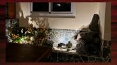 010 軌道燈投射燈工程設計製作LED燈魚池假山照明攝影燈光:軌道燈投射燈工程設計製作LED燈魚池假山照明攝影燈光00116.jpg