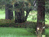 534 武陵農場 櫻花鉤吻鮭 七家灣溪:00173武陵農場櫻花鉤吻鮭七家灣溪.jpg